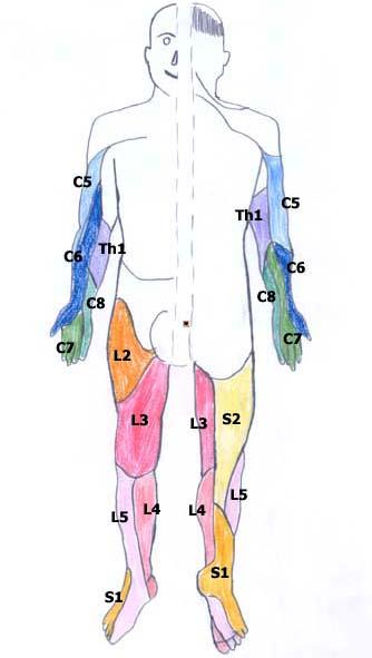 nerven hws symptome